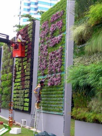 Para que serve um jardim vertical? 6 Usos 1