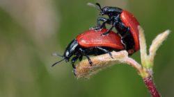 Como os insetos se reproduzem? Recursos e estágios 2