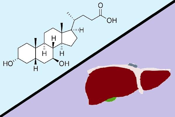 Ácido ursodeoxicólico: uso, efeito terapêutico, contra-indicações 1