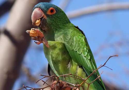 20 animais em extinção na Venezuela 20