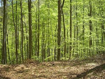 Floresta temperada: característica, flora, fauna, clima 1