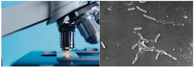Microbiologia ambiental: objeto de estudo e aplicações 1