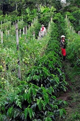 Agroecologia: história, princípios, aplicações e benefícios 1