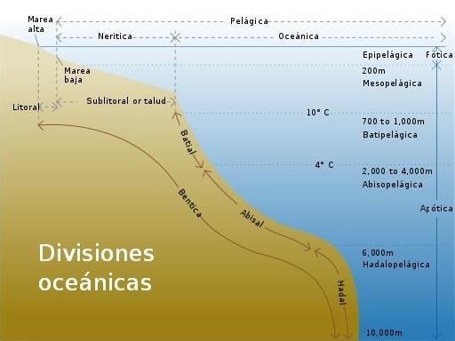 Fundo do mar: características, relevo, tipos, flora e fauna 1