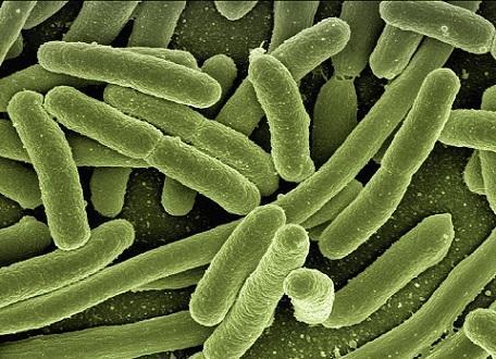 Esfregaço bacteriano: características e preparação 1