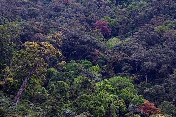 Recursos florestais: características, tipos e usos 1