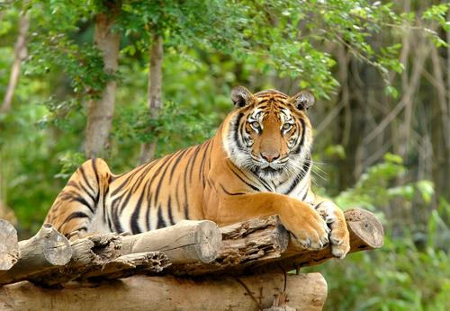 Os 10 animais mais representativos da Ásia 1