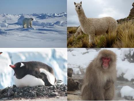 10 Animais em clima frio e suas características 1