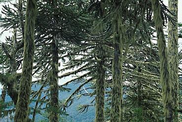 Floresta temperada: característica, flora, fauna, clima 10
