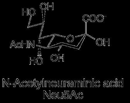 Ácido siálico: estrutura, funções e doenças 1