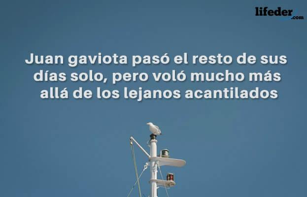 As melhores frases de Juan Salvador Gaviota [com imagens] 7