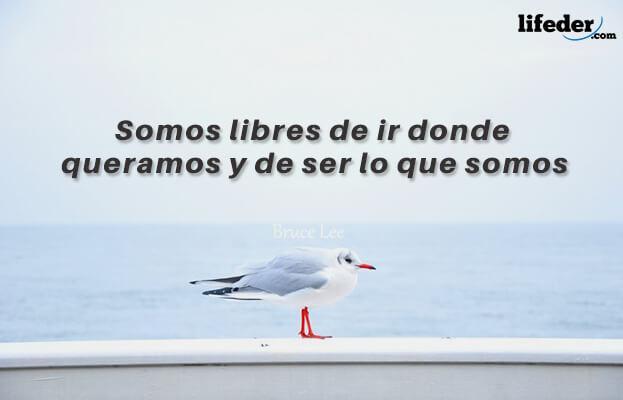 As melhores frases de Juan Salvador Gaviota [com imagens] 15