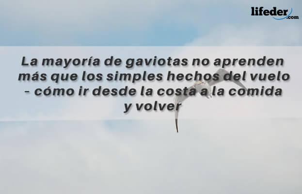 As melhores frases de Juan Salvador Gaviota [com imagens] 20