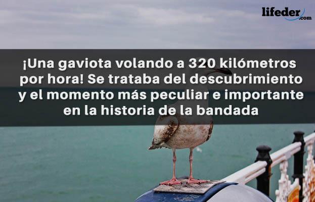 As melhores frases de Juan Salvador Gaviota [com imagens] 28