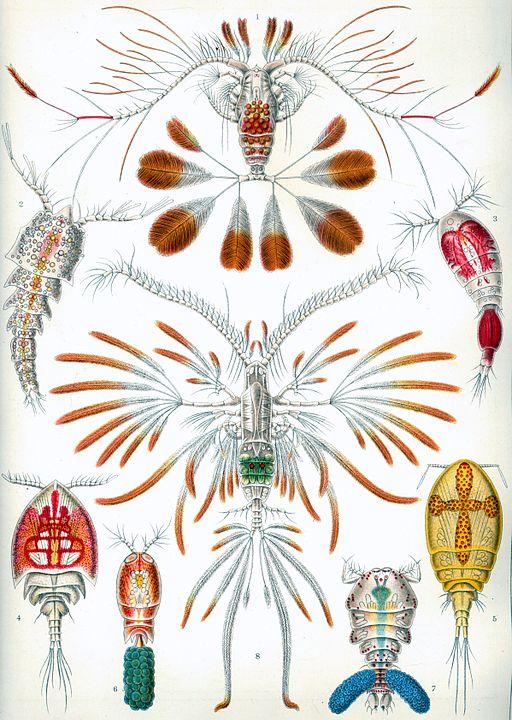 Copepoda: características, habitat, ciclo de vida e aplicações 2