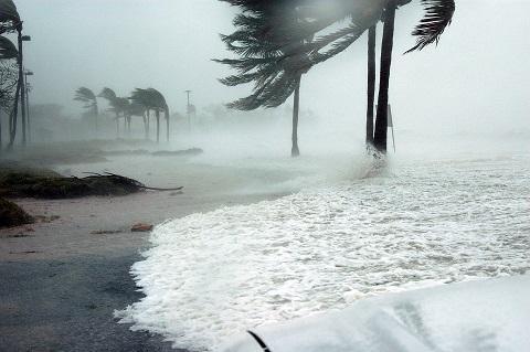 Consequências de tempestades e furacões no ecossistema 2