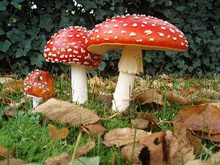 Por que os cogumelos não produzem sua própria comida? 2