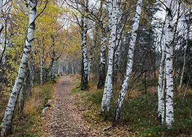 Floresta temperada: característica, flora, fauna, clima 2