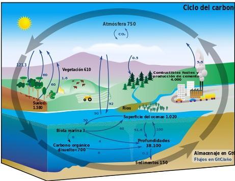 Carbono na natureza: localização, propriedades e usos 6