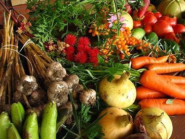 Agroecologia: história, princípios, aplicações e benefícios 2