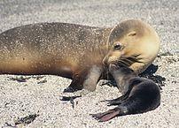 20 Animais da costa equatoriana e suas características 13