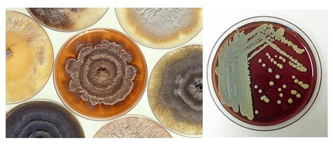 Microbiologia ambiental: objeto de estudo e aplicações 3
