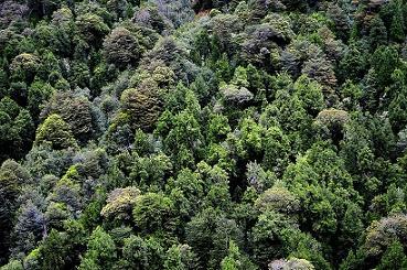 Floresta temperada: característica, flora, fauna, clima 3