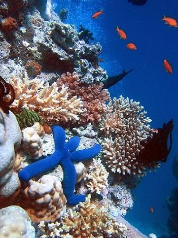 Fundo do mar: características, relevo, tipos, flora e fauna 3