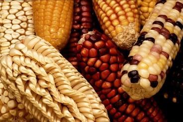 Agroecologia: história, princípios, aplicações e benefícios 3