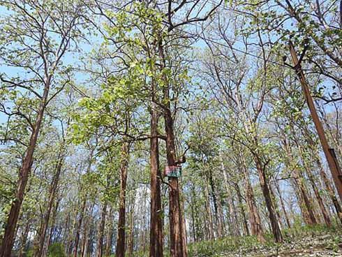 Recursos florestais: características, tipos e usos 3
