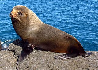 20 Animais da costa equatoriana e suas características 14