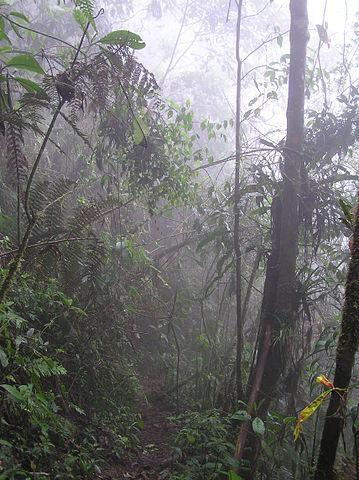 Floresta úmida tropical: características, clima, flora e fauna 1