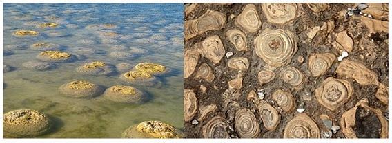 Microbiologia ambiental: objeto de estudo e aplicações 4