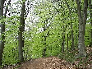 Floresta temperada: característica, flora, fauna, clima 4