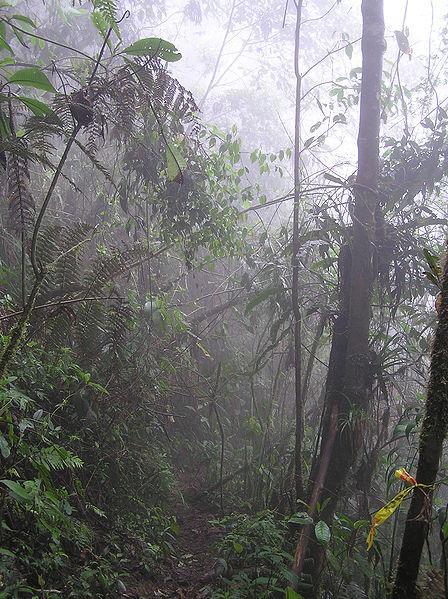Floresta tropical do Pacífico: características, flora, fauna, clima 1