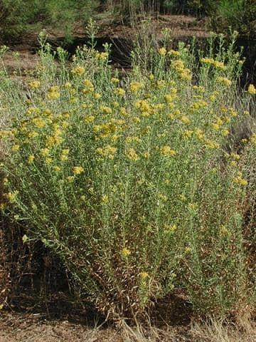 20 plantas do deserto e suas características 3