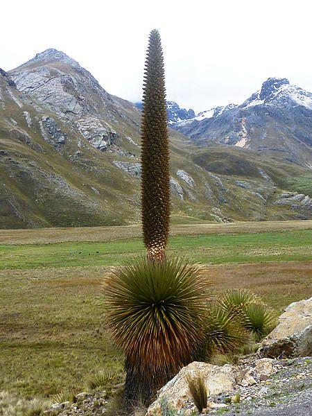 14 plantas em perigo de extinção no Peru