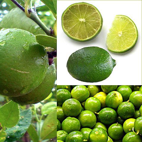 Citrus × aurantifolia: características, habitat, propriedades, cuidados 2