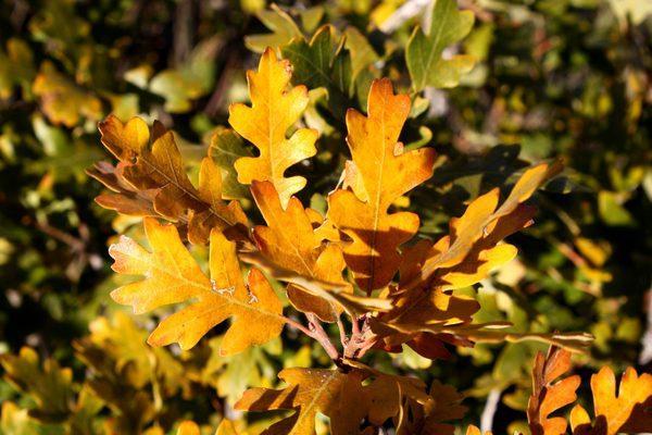 Floresta temperada: característica, flora, fauna, clima 5