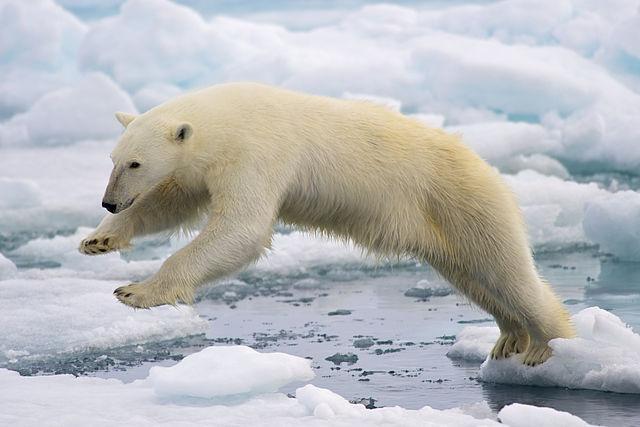 15 consequências do aquecimento global em todo o mundo 4