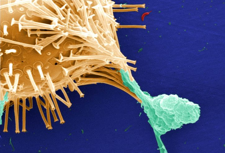 Ecologia microbiana: história, objeto de estudo e aplicações 5