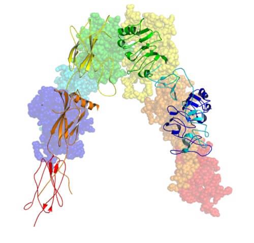 Receptores de insulina: características, estrutura, funções 2