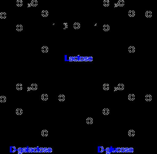 Dissacarídeos: características, estrutura, exemplos, funções 1