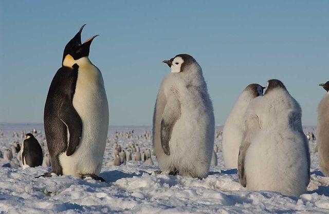 Oceano Antártico: origem geológica, clima, flora e fauna 4