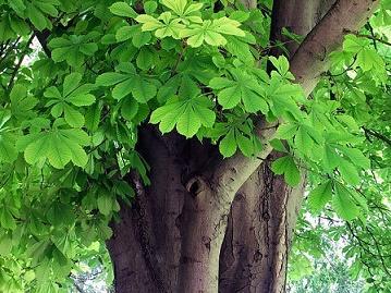 Floresta temperada: característica, flora, fauna, clima 6