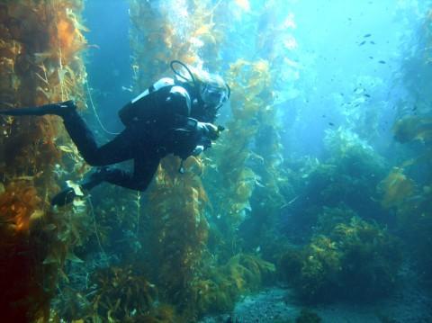 Fundo do mar: características, relevo, tipos, flora e fauna 6