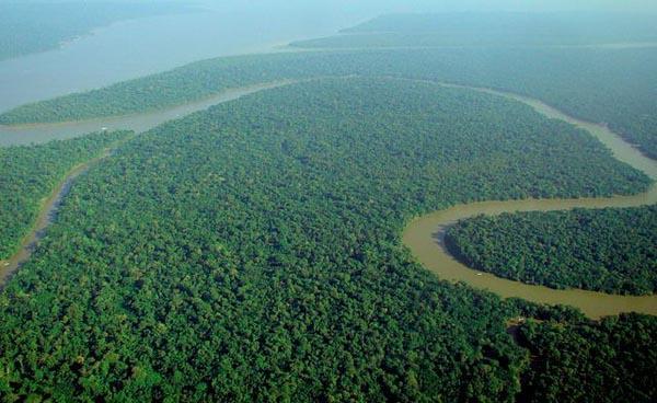 Recursos florestais: características, tipos e usos 6
