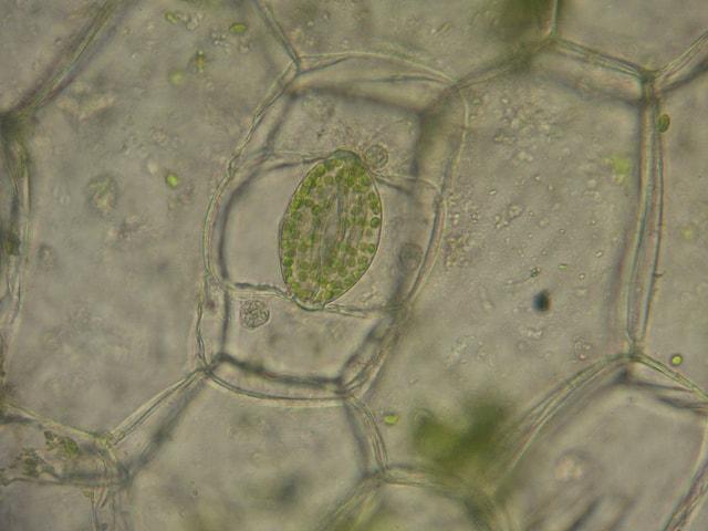 Excreção de plantas: tipos de substâncias, processos e estruturas 1