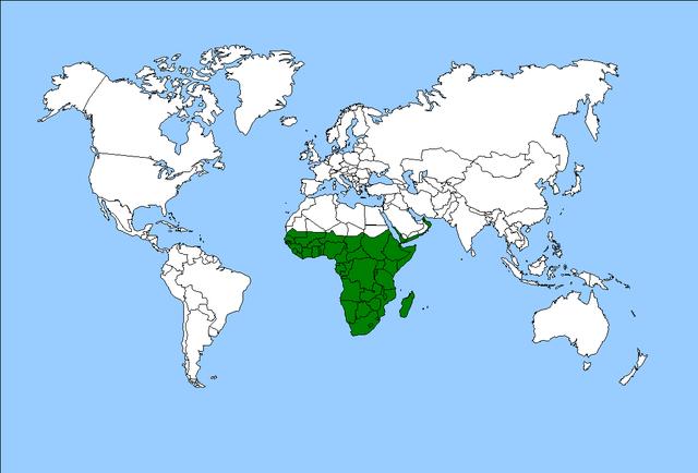 Regiões biogeográficas do mundo e suas características 4