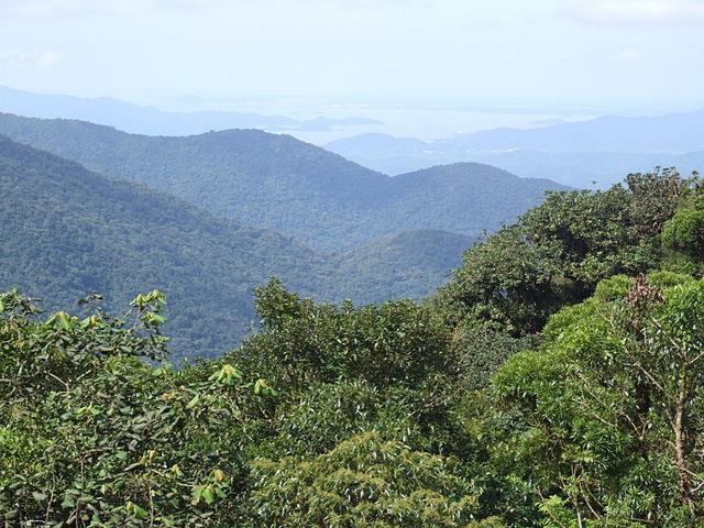 Selva paranaense: características, clima, flora e fauna 1
